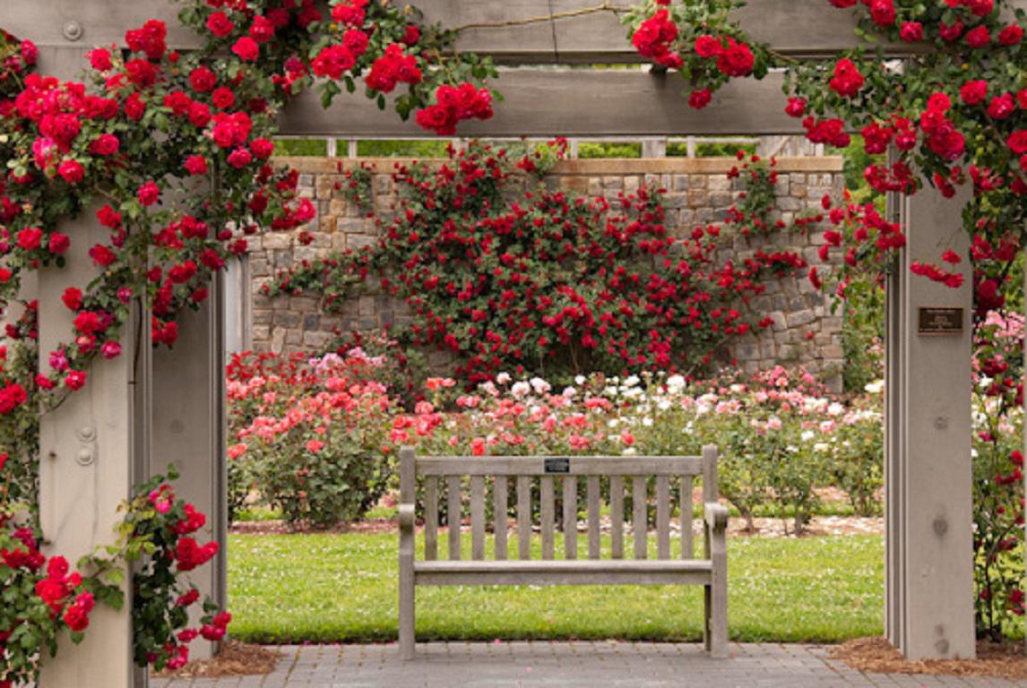 Rose Garden by KellyHarts (bab0c1ca3) | SingSnap Karaoke